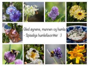 spiselige blomster humlene liker