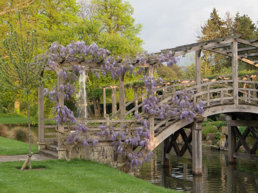 Blåregn på romantisk bro