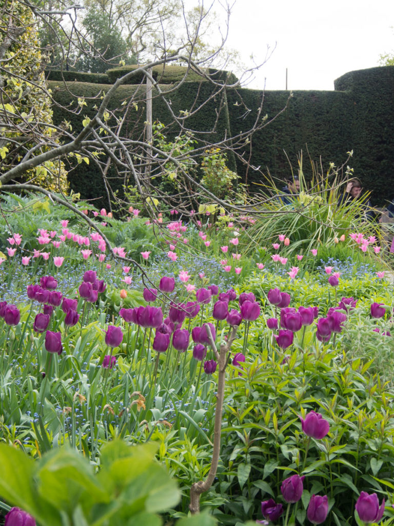 bed med tulipaner og mangolia på Great Dixter