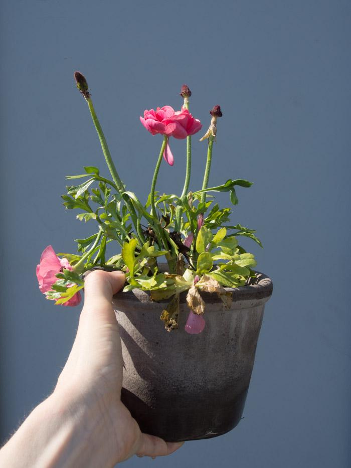 planter liker ikke å bo i små krukker