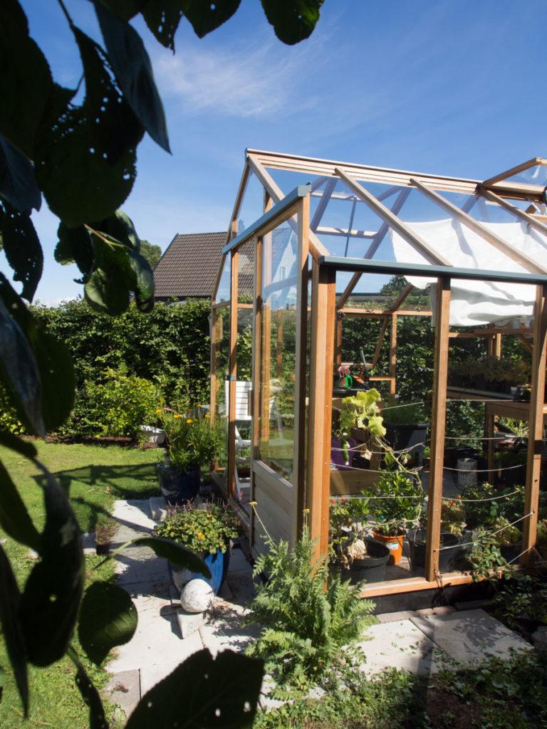 Drivhus Juliana Classic fra Tilboligen, i sedertre og glass