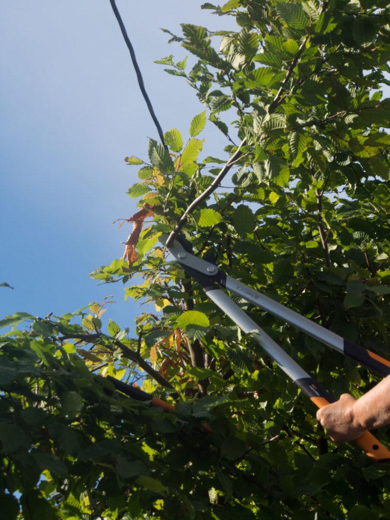 Grensaks brukt for å klippe hekk