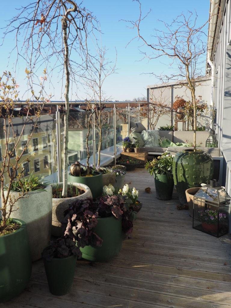 Takterrasse i slutten av mars, med krukker med trær, stauder og løkblomster. Og en sitteplass