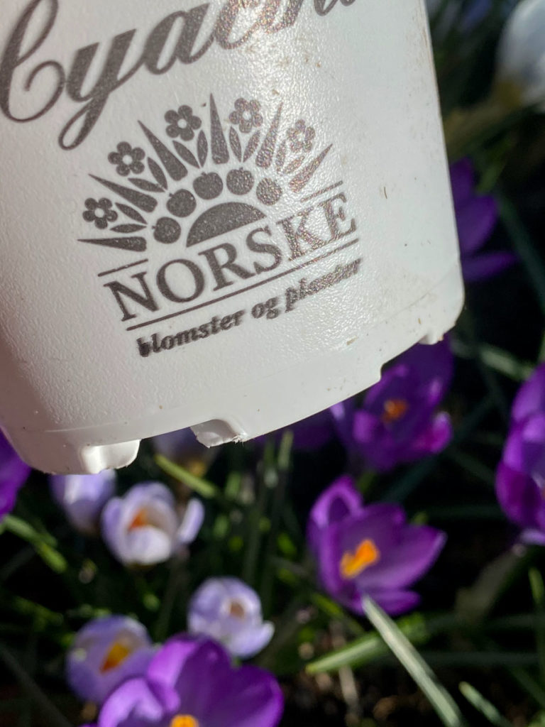 Merke som viser at planten eller blomsten er produsert i Norge